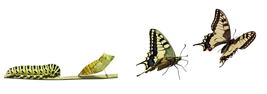 מדעי הטבע והחיים